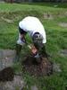 苗木ポットの穴掘り
